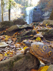 The Turtle and the Waterfall by Kelii