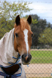 Horse Portrait by thegeforce