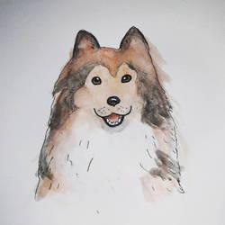 Lassie!  by blackvelvet25
