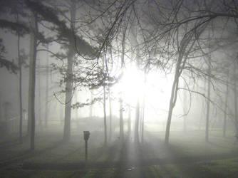 Night Fog by bracomadar