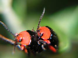 Bug Love by StewartSteve