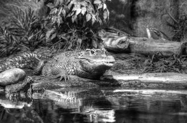 Crocodile in waiting by StewartSteve
