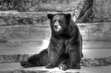 Bear by StewartSteve