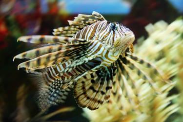Lion Fish by StewartSteve