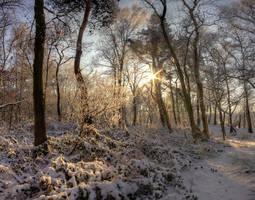 Winterwoods by carlahoon