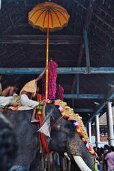 Temple Elephant by harikul