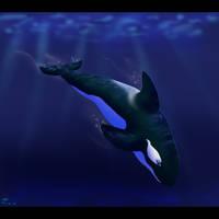 '...Swimming Orca...' by KerriganBuwan