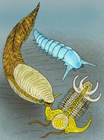 Arandaspis priontolepis V2 by avancna