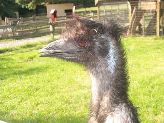 The Human Emu? by rachaelfrog
