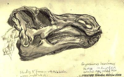 Gryposaurus skull by GlendonMellow