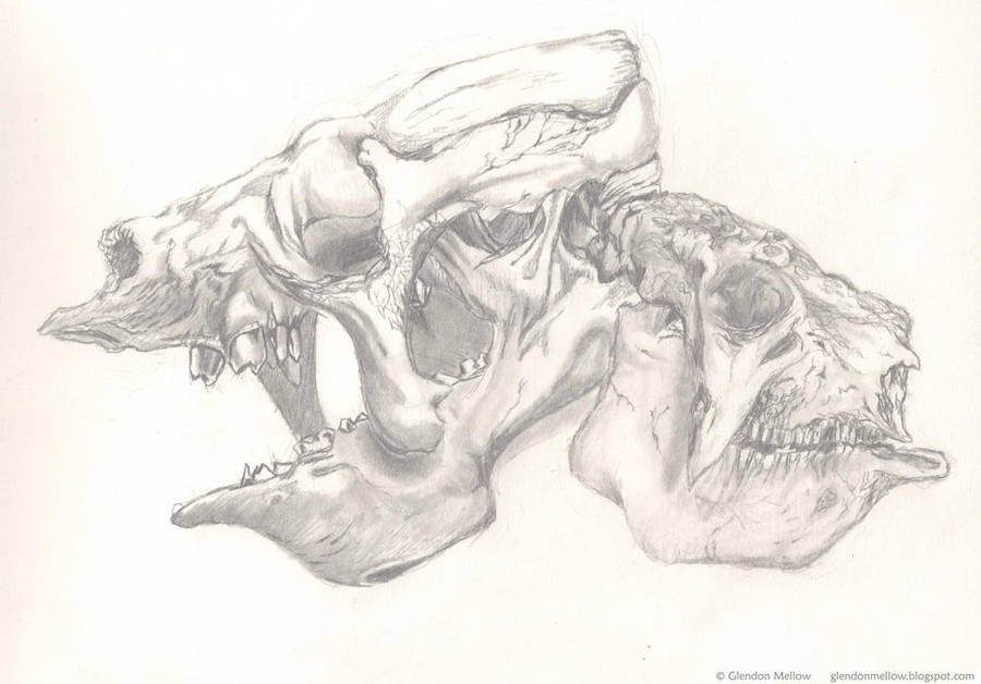 Eremotherium Glyptodon skulls by GlendonMellow