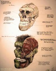 Incredible Hulk Anatomy by GlendonMellow