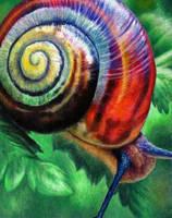 Snail- Oil pastel by Raicahale