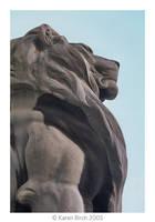 Lion by karenbirch