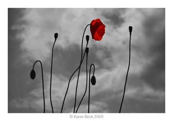 Moody Poppies by karenbirch