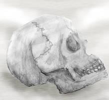 Skullzorz by Quarl