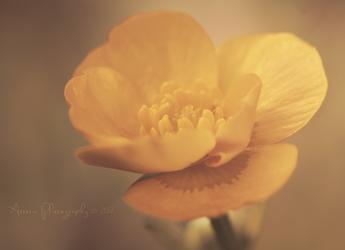 Golden Sunlight by Azzeria