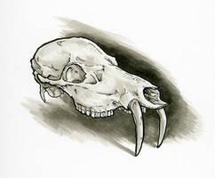 Chinese Water Deer Skull Study by Dreamspirit