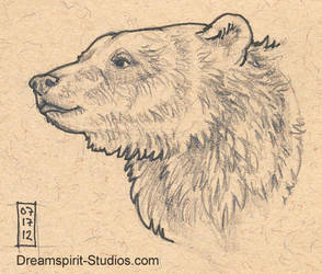 Bear Head Sketch by Dreamspirit