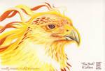 Fire Hawk by Dreamspirit