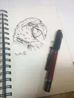 Macaw Sketch by Dreamspirit