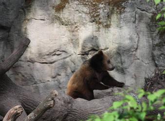 russian bear by Ryuk-Yuuko