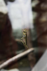 on glass by Ryuk-Yuuko