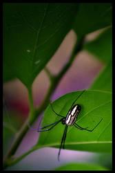 Spider 1 by lunibin