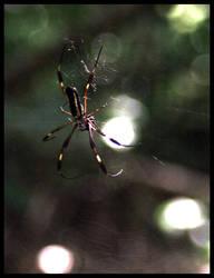 Spider by lunibin