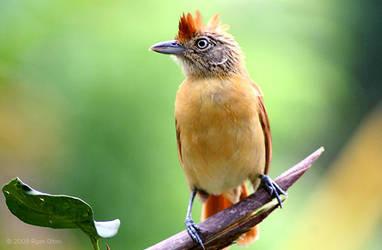 Bird 2 by lunibin
