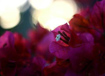 Sunset Flowers by lunibin