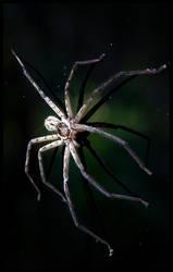 Spider II by lunibin