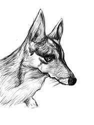 Sketching: Tifa Corgi: 001 by coffingirl