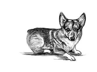 Sketching: Tifa Corgi: 002 by coffingirl