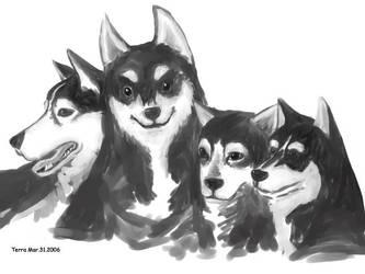 Animals: Siberian Husky by coffingirl