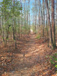 Cedarville State Forest by sioranth