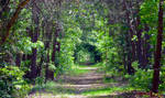 Emerald Tunnel by sioranth