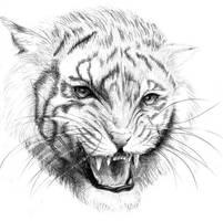 Young Tiger by El-Chupacabras
