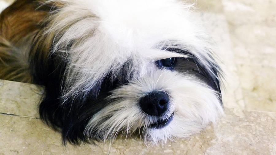 Sad Puppy Dog Eyes By Stephiesy On Deviantart
