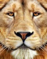 Lion by KomodoEmpire
