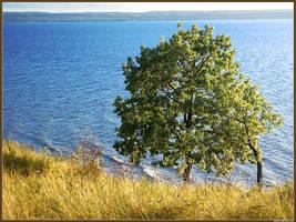 Oak tree full by spirik