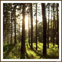 Forest by spirik