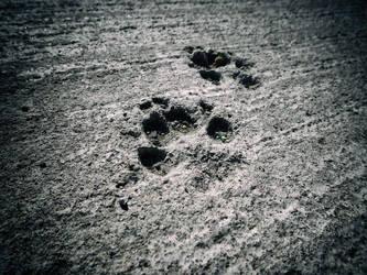 steps in concrete by shmootik