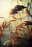 In the light by elizarosca