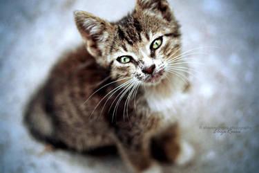 Kitty by elizarosca