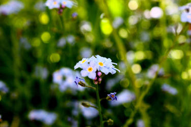 Blue Flower 1 by Ztinny