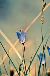 lila by inkoginko