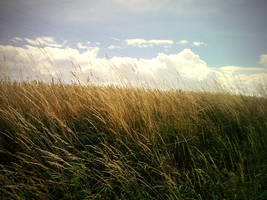 Wind by mickhummel