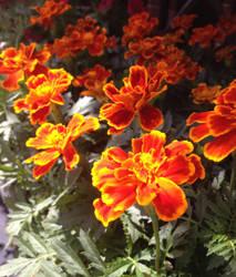 Fire Flowers by multifandomed25