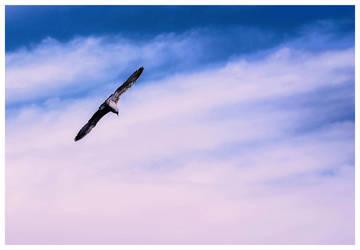 freedom by sevCANN